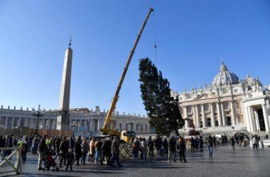 Božićno drvo podignuto na Trgu Sv. Petra