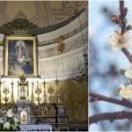 'Čudesni grm' – biljka koja neobjašnjivo cvjeta u prosincu znak je nazočnosti Marije u našim životima