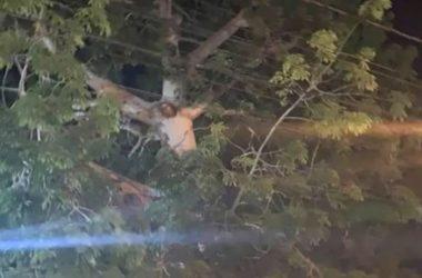 VIDEO: LJUDI ISTRČALI IZ KARANTENE I POTRČALI PREMA ŠUMI, POLICIJA NA RUBU ŽIVACA Na vrhu drveta pojavila se neobična slika: 'Ovo je Isus!'
