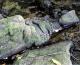 Ribolovac naletio na izgubljeni drevni kip Gospe s Isusom